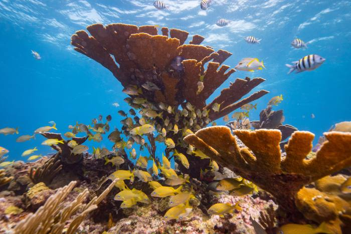 ISLA MUJERES - SEPTEMBER 26:  A general view of a school of fish and a sea can in a healthy coral reef off the coast of Isla Mujeres, Mexico on September 26, 2018. Many avid divers come to Isla Mujeres for the crystal clear waters full of biodiversity.  (Photo by Donald Miralle/Getty Images for Lumix)