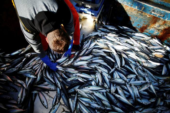 A French fisherman with a catch of mackerel. France is demanding continued access to the six- to 12-mile coastal zone around the UK