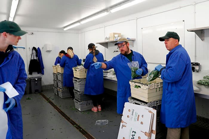 Packers at a farm near Dorchester, 2020. Pre-Brexit, UK farmers relied heavily on seasonal workers from eastern Europe, and now worry about recruitment