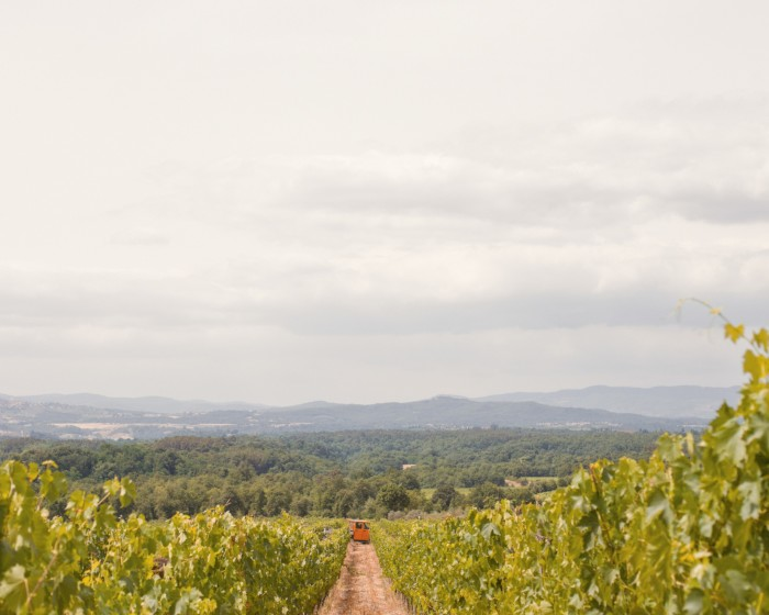 The Polissena vineyard – Il Borro produces about 200,000 bottles of wine annually