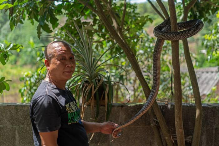 Snake breeder Hua Chaojiang from Guangxi