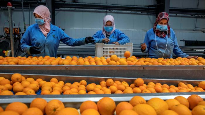 Most of Egypt's orange exports come from large farms on reclaimed desert land