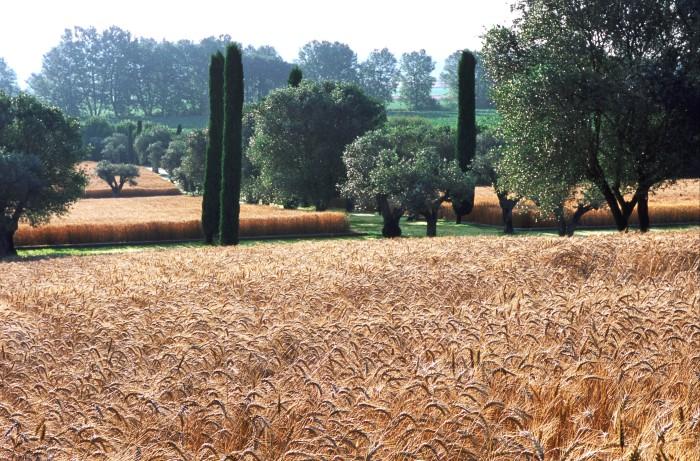 Cotoner, a private garden in Majorca, Spain