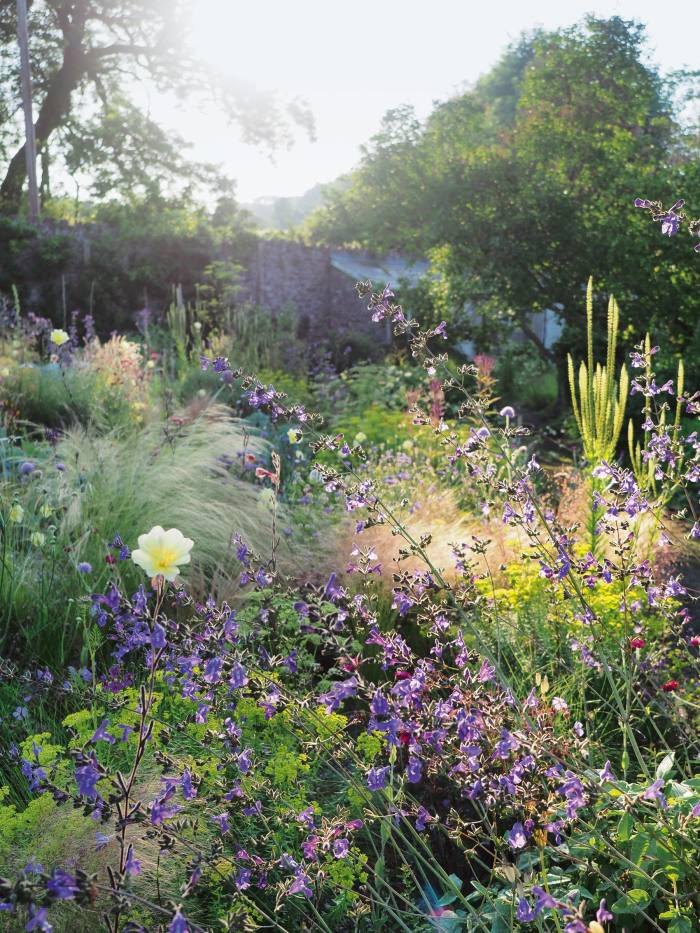 Sarah Price's garden in Abergavenny
