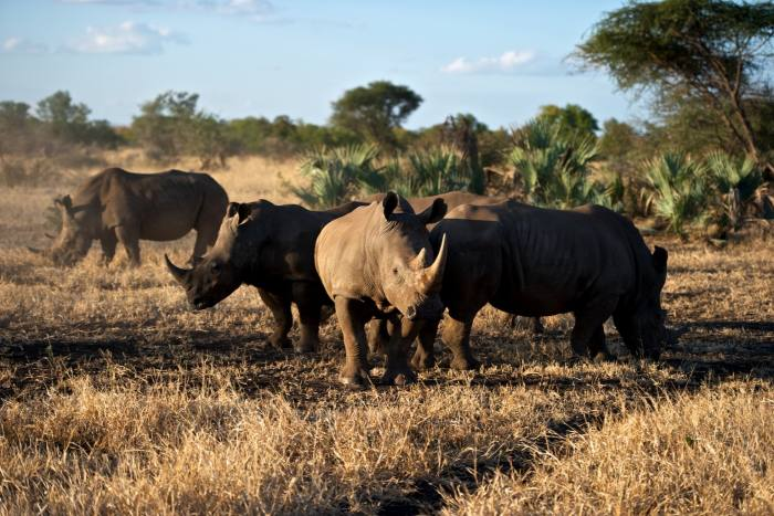 Zimbabwe's Malilangwe Wildlife Reserve, where Cazenove + Loyd is offering placements in conservation projects