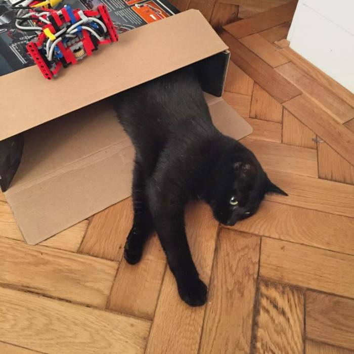 Executive editor Tim Auld's cat Lucky