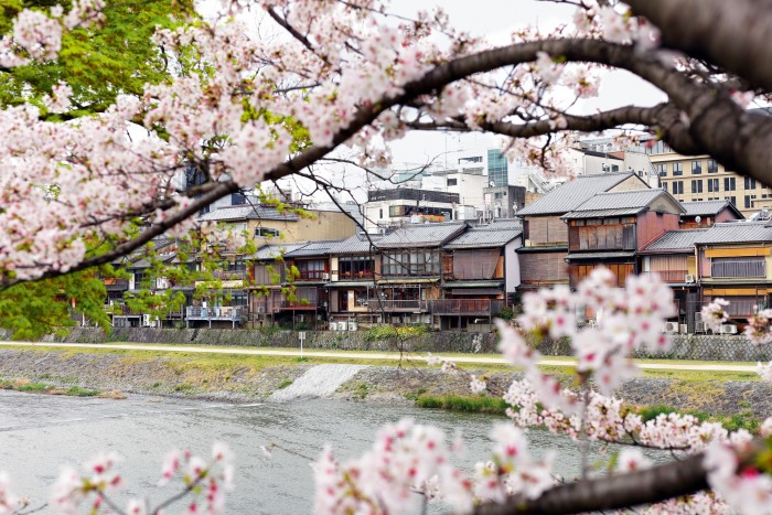 Sakura flowering in Kyoto, where Pei found a textile processed from the tree's bark