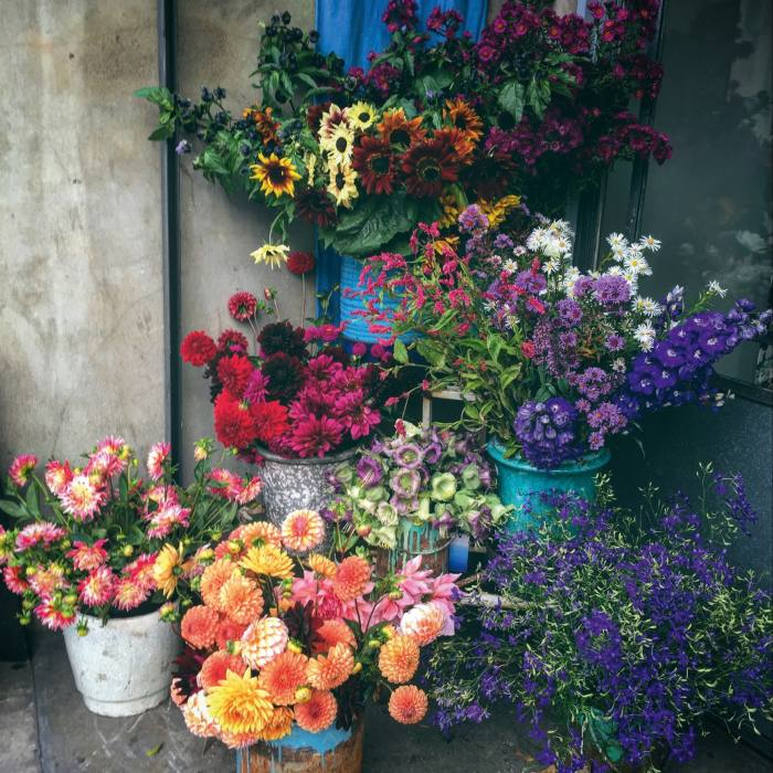 Glaves's flowers for sale at Designers Guild, London