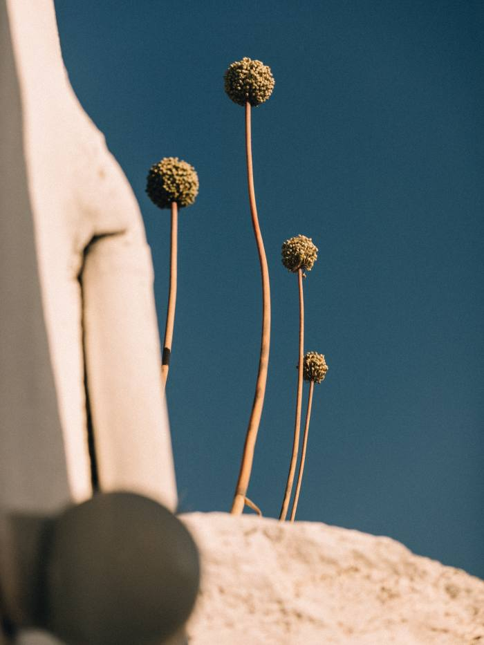 An early-morning shot of local flora in Chora