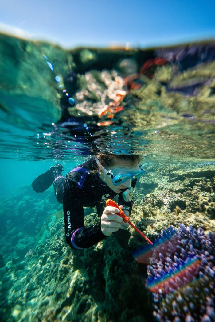 """""""Coral gardening"""" off Fiji is one of the initiatives supported by Pelorus"""
