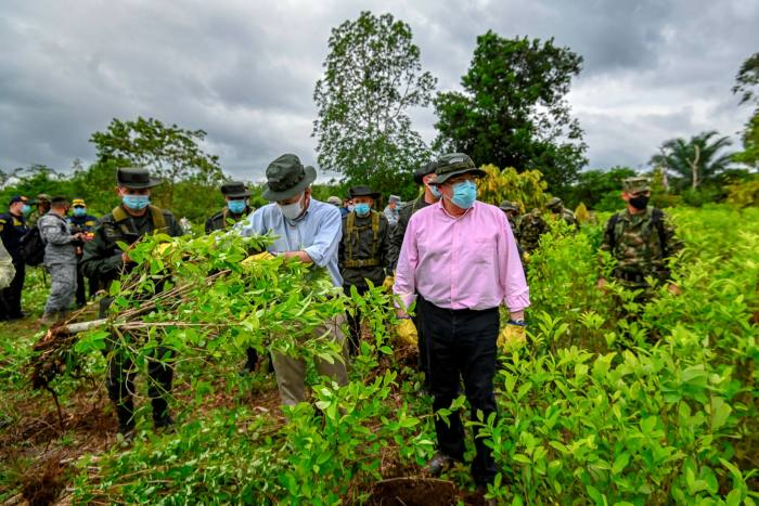 US ambassador in Colombia Philip S. Goldberg (L), holds a coca plant next to defence minister Carlos Holmes Trujillo, during an operation to eradicate illicit crops in Tumaco in December