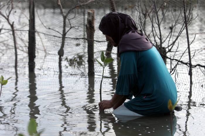 A person plants mangroves in the mudflats of the Alue Naga coastal area in Banda Aceh, Indonesia on Jan. 14