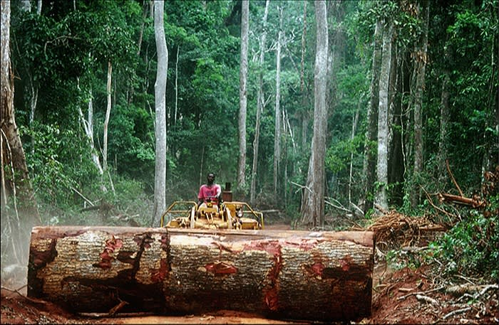Deforestation in the Central African Republic: scientists agree that destruction of the natural world makes spillovers of new viruses into the human population more likely