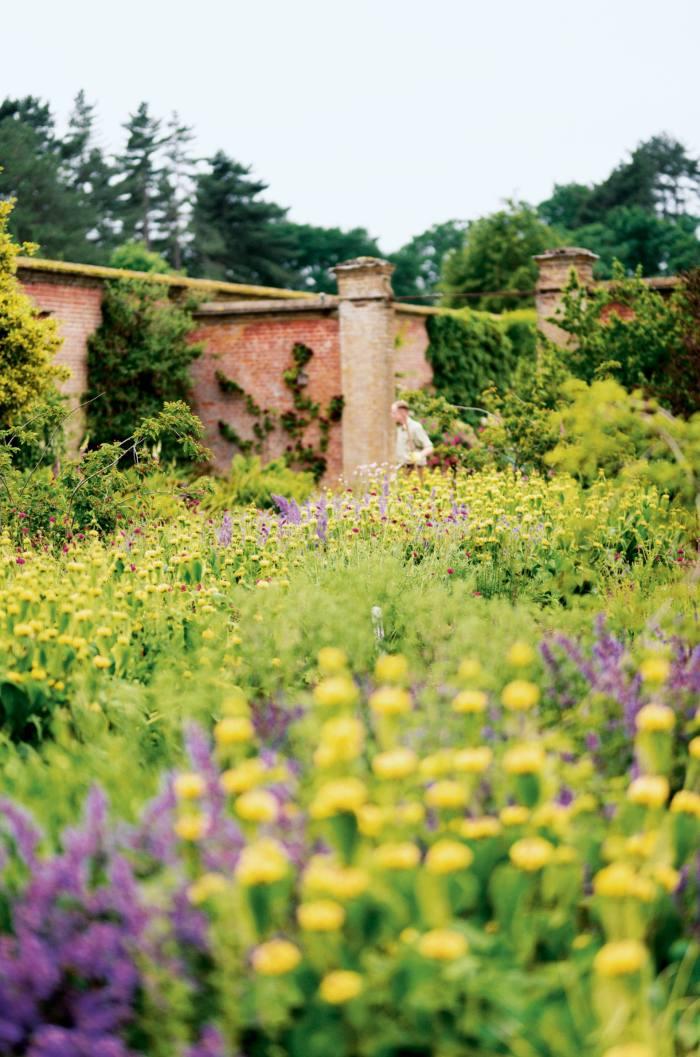 Flowers in Holkham's walled garden