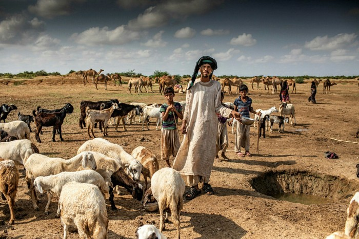 A villager from the Rashaida people, one of the nine tribes of Eritrea, takes the livestock to drink from the well