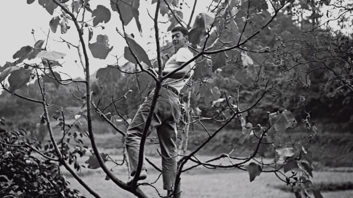 Artist JB Blunk in a fig tree in Japan, c1952