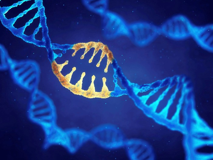 Double helix DNA molecule with modified genes