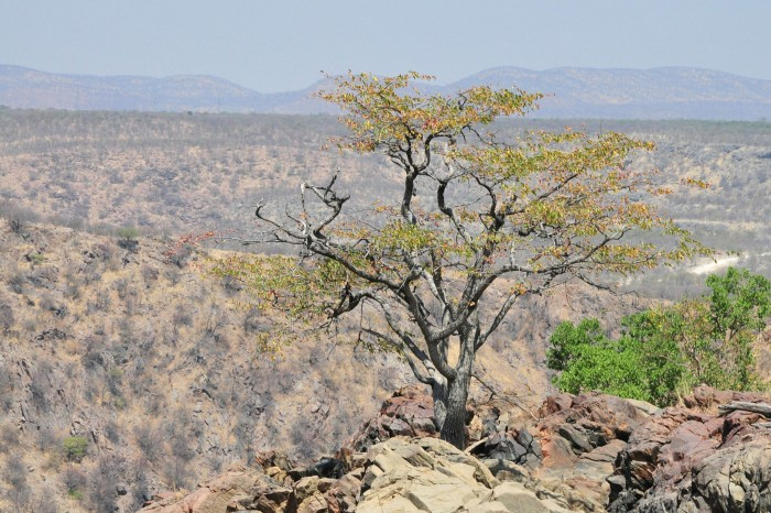 A recent view of Angola's bone dry Kunene river, which leads to the Ruacana waterfalls, shows the state of vegetation after four years of drought