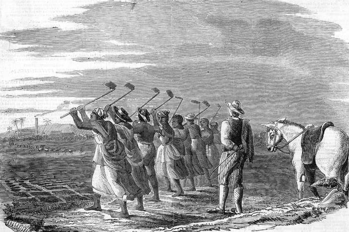 Slaves in the West Indies prepare individual plots for sugar canes, circa 1820