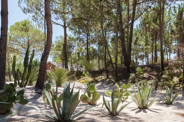 Grange's Comporta residence is nestled among pine trees and sand dunes