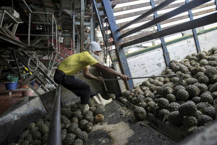 A worker unloads pineapples from a truck at a fruit processing plant in Thailand