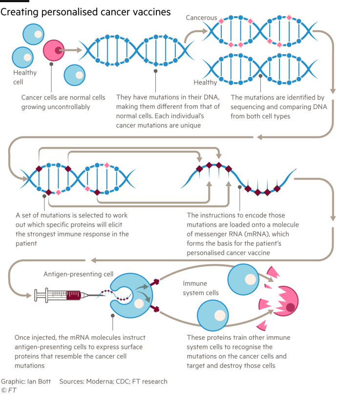 Diagram showing how cancer vaccines can be engineered to treat individual patients