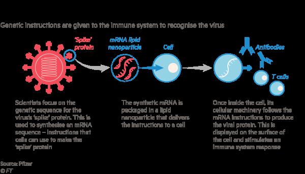 How mRNA vaccine works