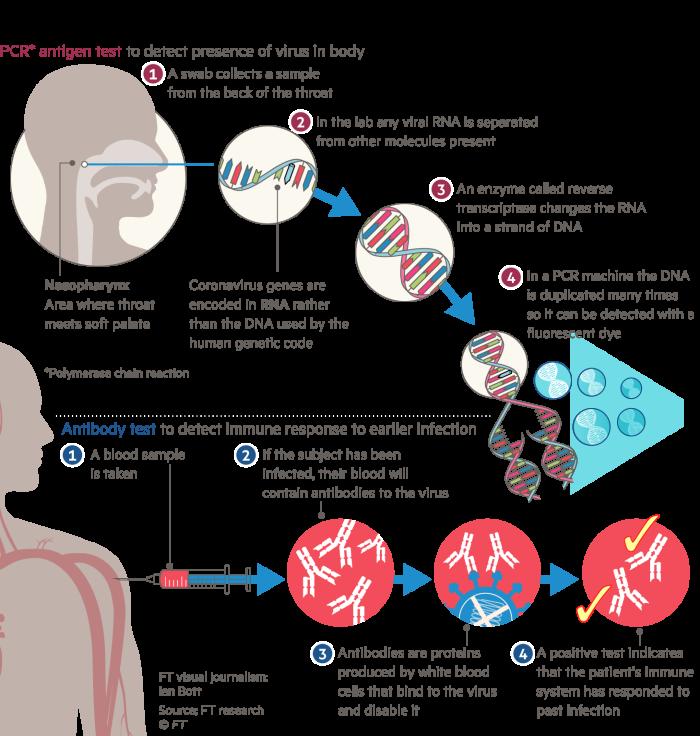 Diagram explaining the two main testing processes for Coronavirus