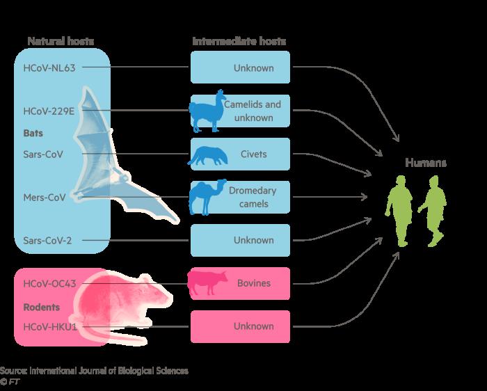 Diagram showing the animal hosts of various human coronaviruses