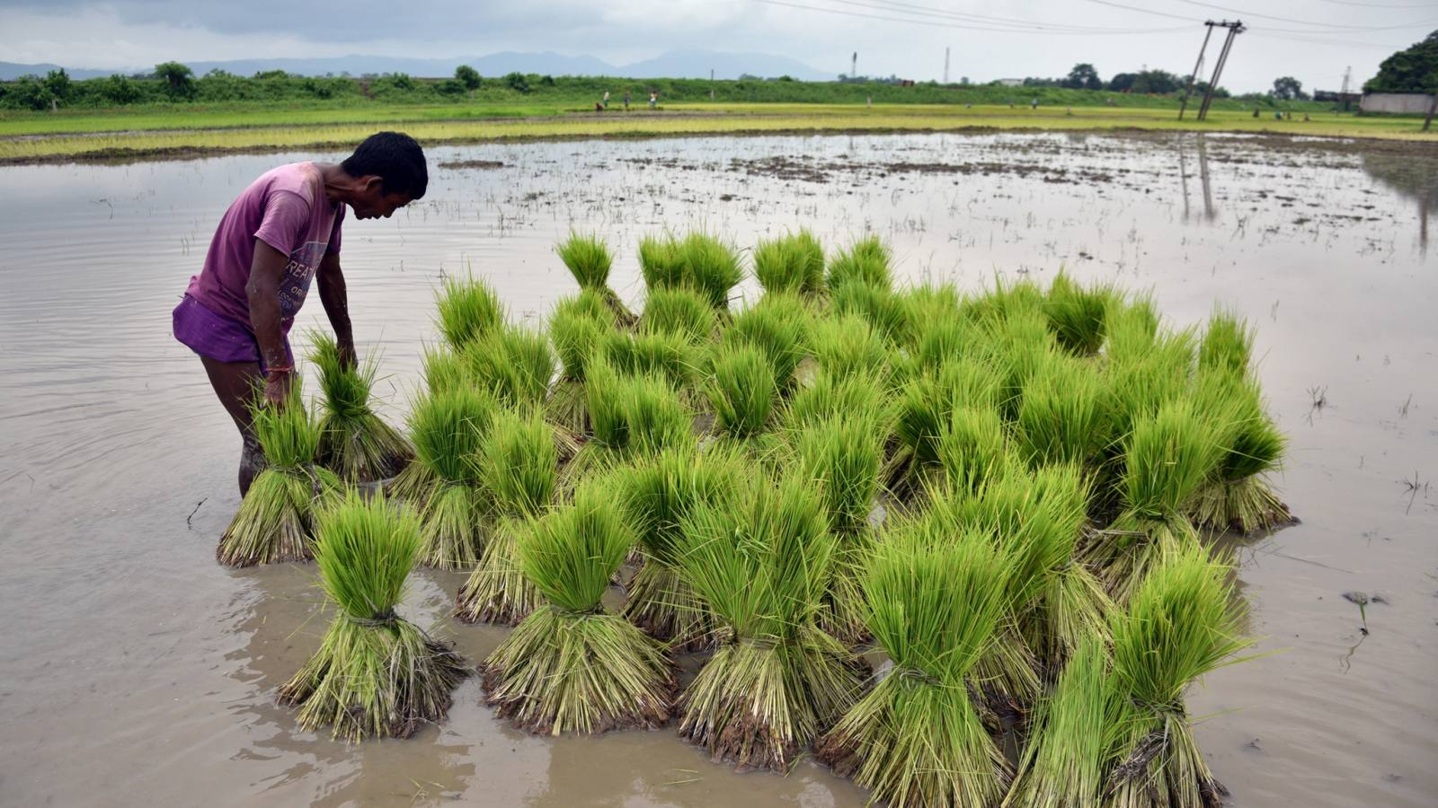 A farmer in India