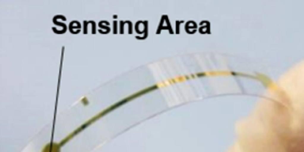 Film-like sensor shows when fresh fish is spoiling