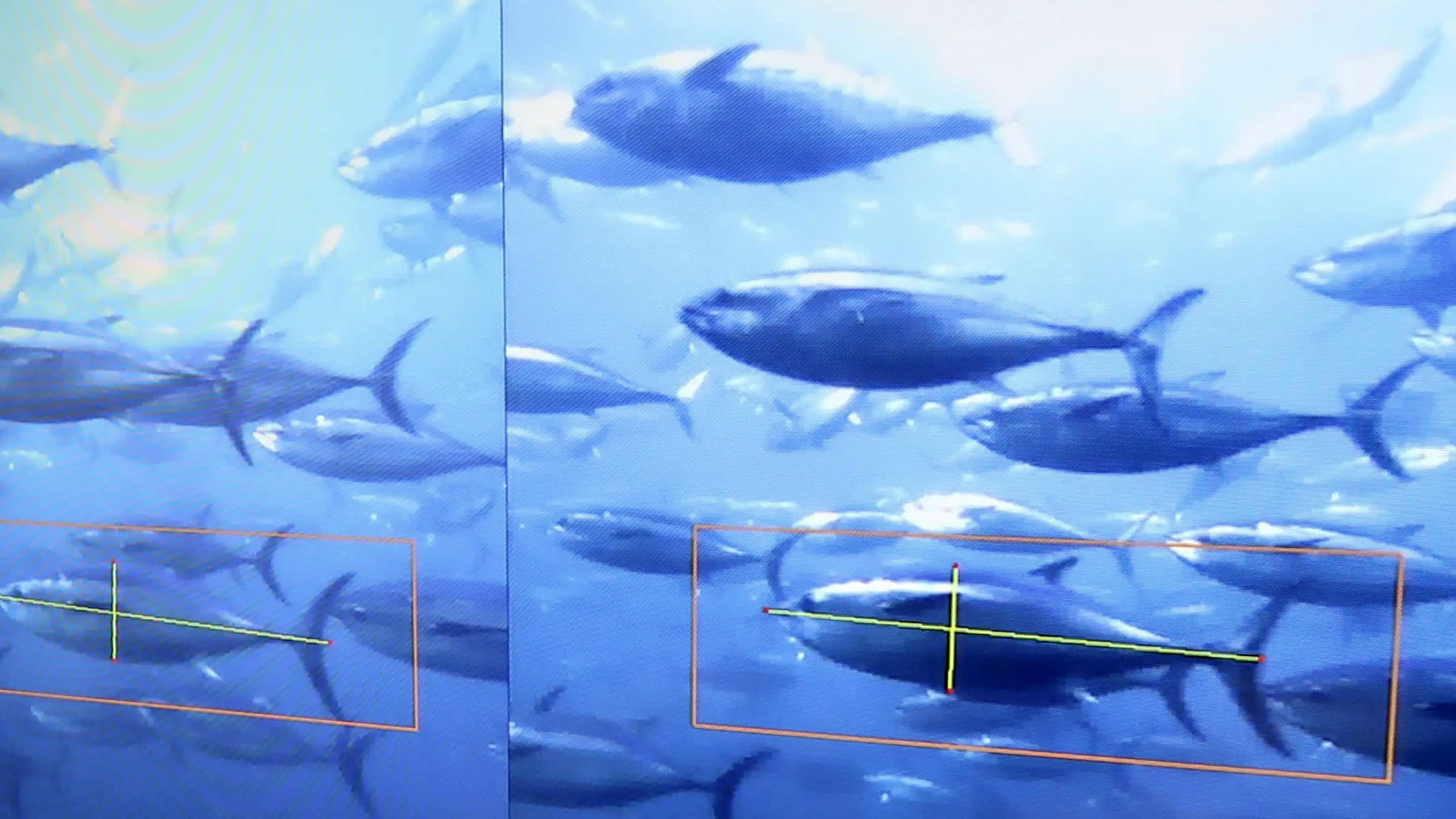 Japan's fish farmers deploy AI and drones to feed hungry