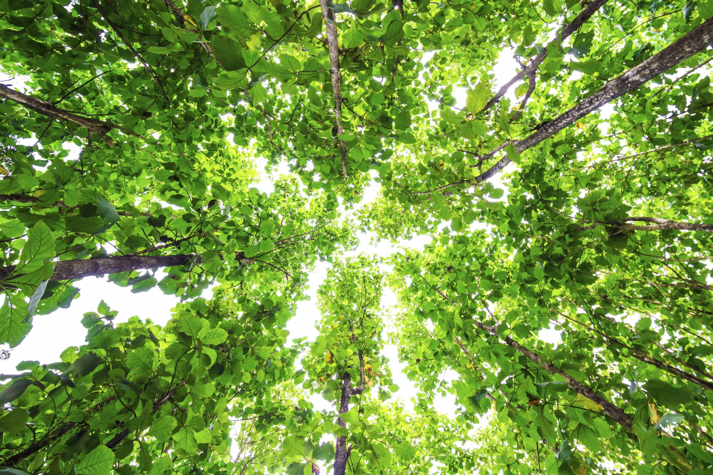 How to improve your ESG credentials