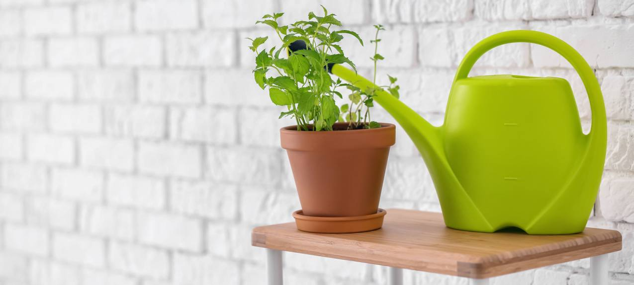 Plant and watering can on table