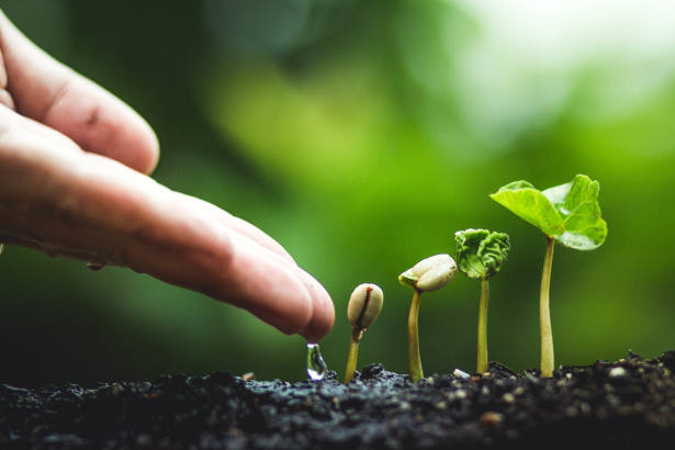 How DFMs are incorporating sustainable investing