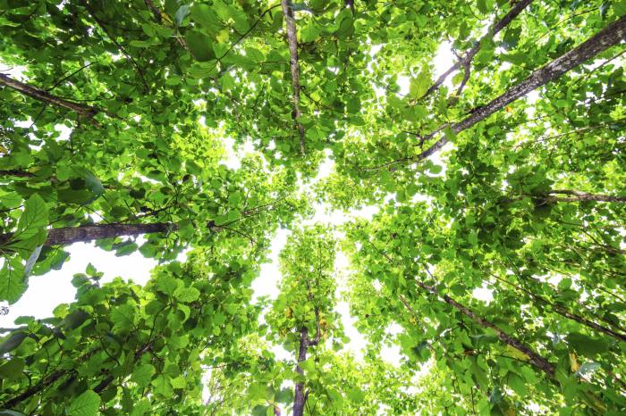 Fundsmith launches sustainable double