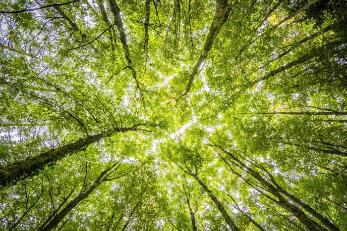 Clients continue to drive ESG growth amid turmoil