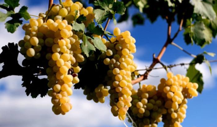 Fine wine investment scheme shut down by courts