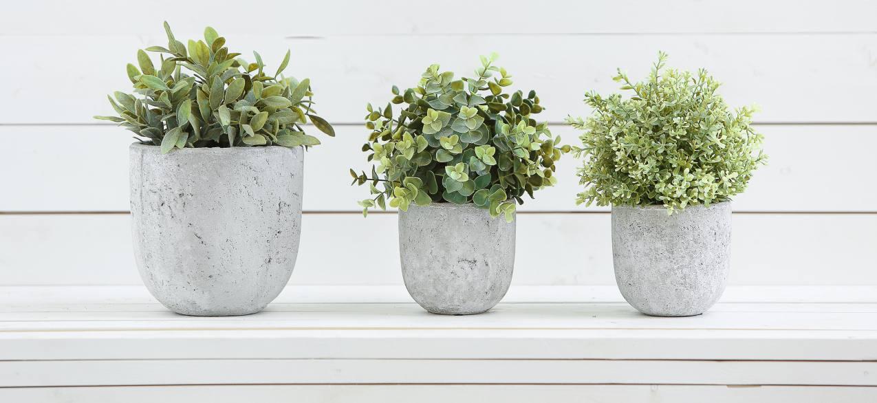 Three plants in stone pots
