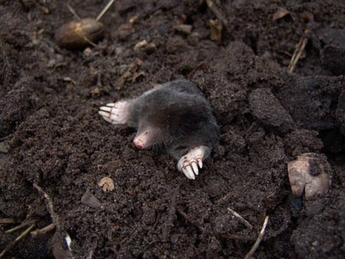 Big insurers branded 'too much like moles'