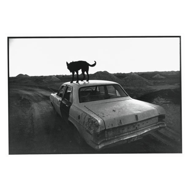Image Courtesy of Wim Wenders and Blain|Southern
