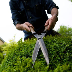 The Niwaki garden shears have high-carbon SK steel blades, white oak handles and a leather sheath