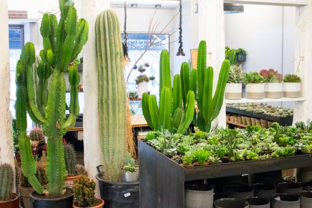 Josep Font highlights Cacto-Cacto, which stocks cacti of all kinds