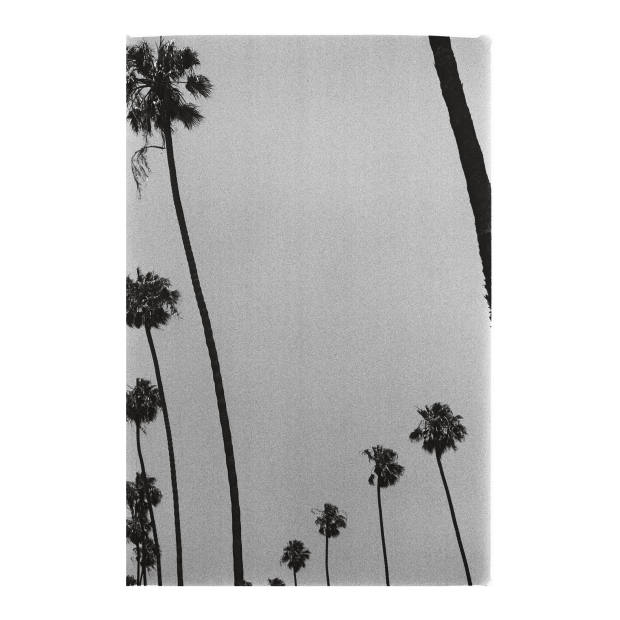 Palms on 3rd Street, Santa Monica. Taken by the author using a Leica IIIa
