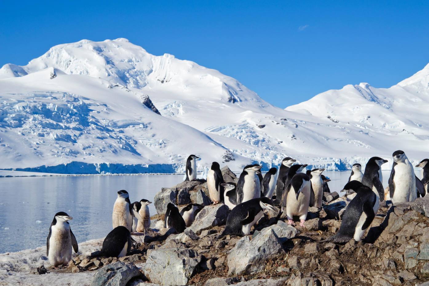 An epic cruise to Antarctica
