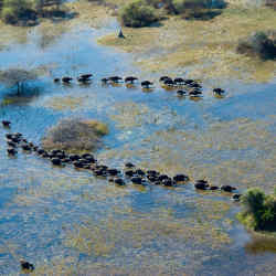 The safari can be divided into separate trips and tailored to the seasons