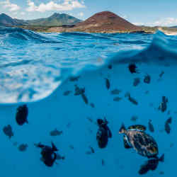 Ascension Island, where the Blue Marine Foundation has helped fund British government plans to create a marine reserve almost the same size as the UK