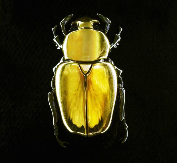 Shaun Leane gold Beetle brooch, £8,500