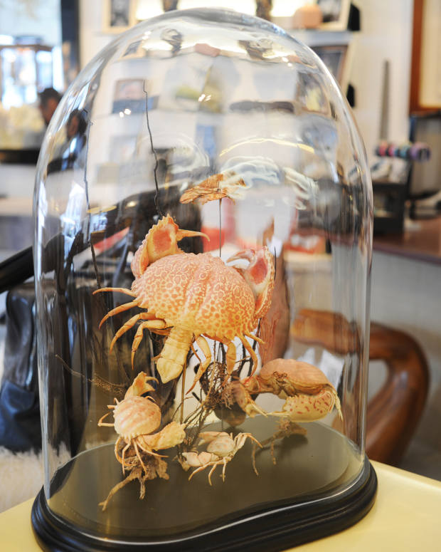 Taxidermy crustacean exoskeleton, €6,500, from Sea Memory