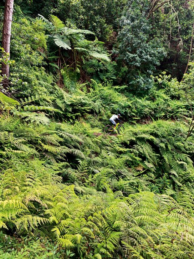 Ducking the huge ferns overhanging the trail
